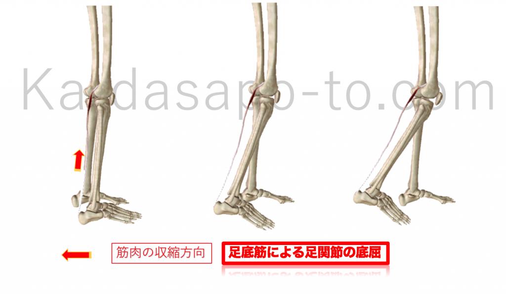 足底筋による膝関節屈曲