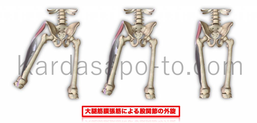 筋膜張筋による股関節外転