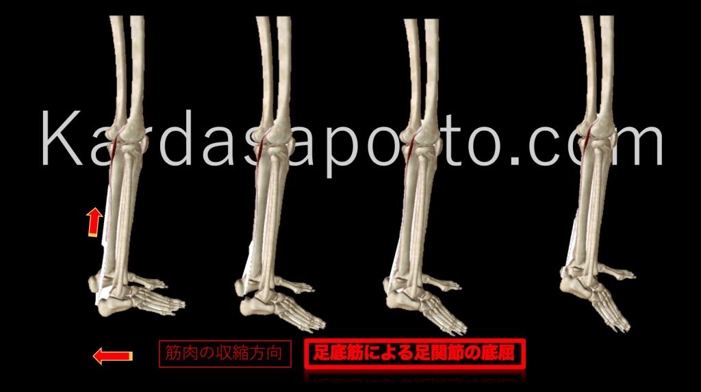 足底筋による足関節の底屈