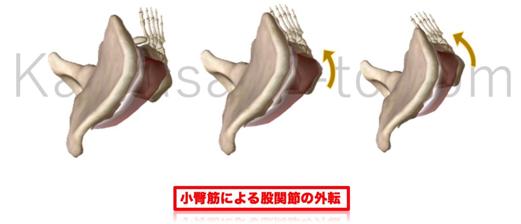 小臀筋による股関節内旋