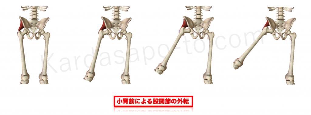 小臀筋による股関節外転