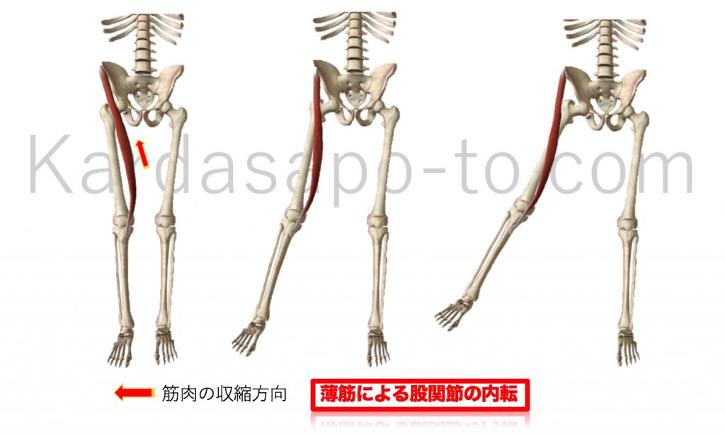 縫工筋による股関節外転