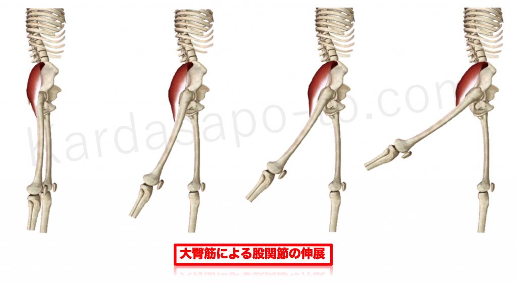 大臀筋による股関節伸展