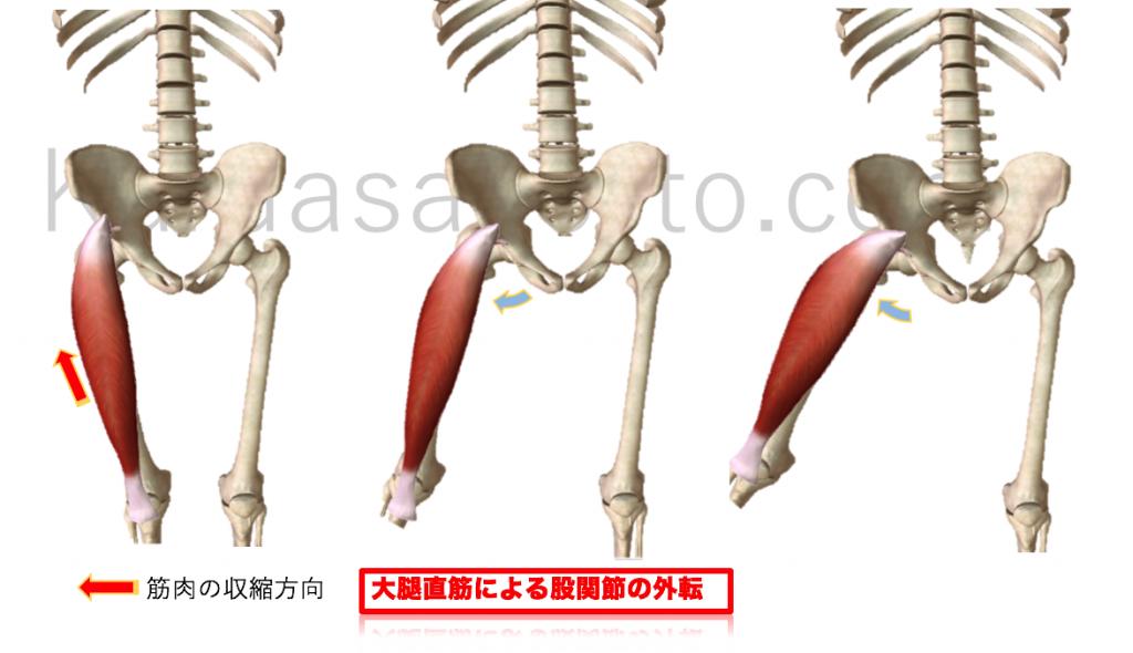 大腿直筋による股関節外転