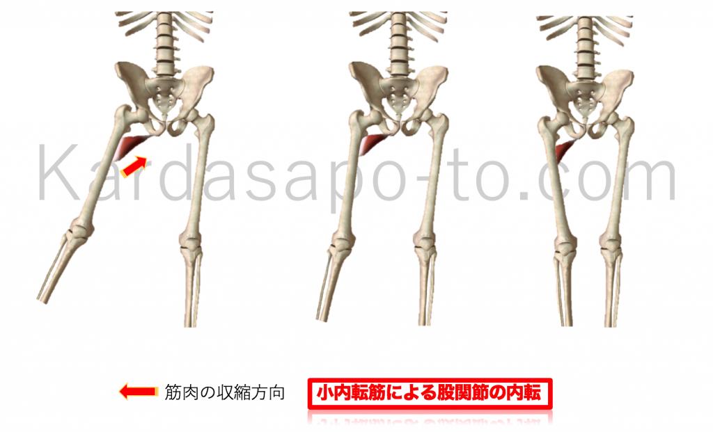 短内転筋による股関節内転