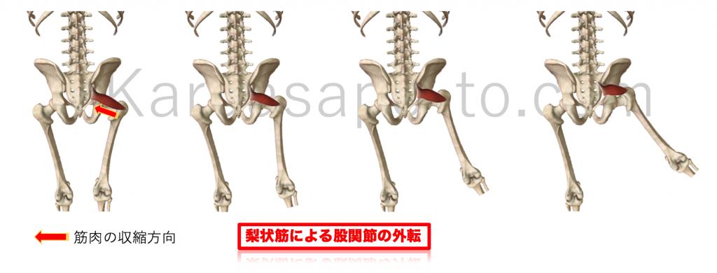 梨状筋による股関節外転