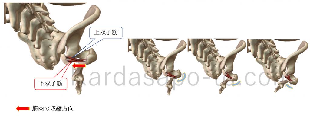上双子筋による股関節外旋