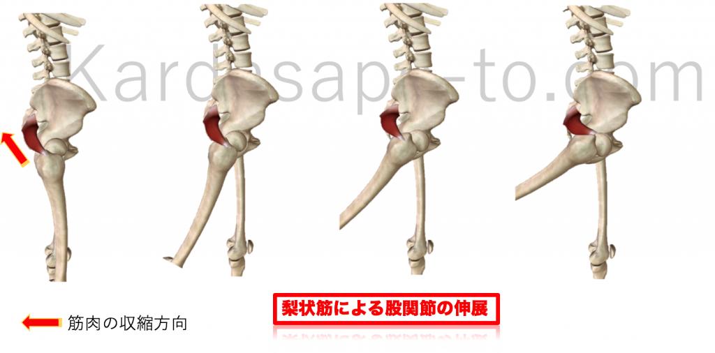 梨状筋による股関節伸展