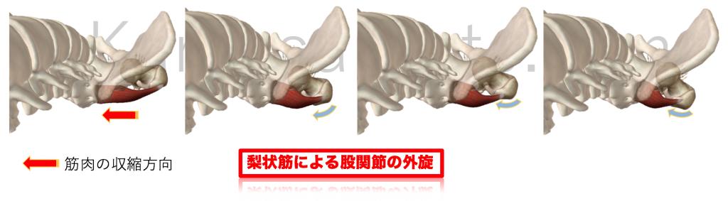 梨状筋による股関節外旋