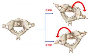 環椎と軸椎の回旋図