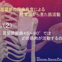 肩関節屈曲45〜90°ではどの筋肉が活動するの?