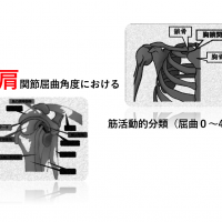 肩関節屈曲角度における筋活動的分類(屈曲0〜45°)
